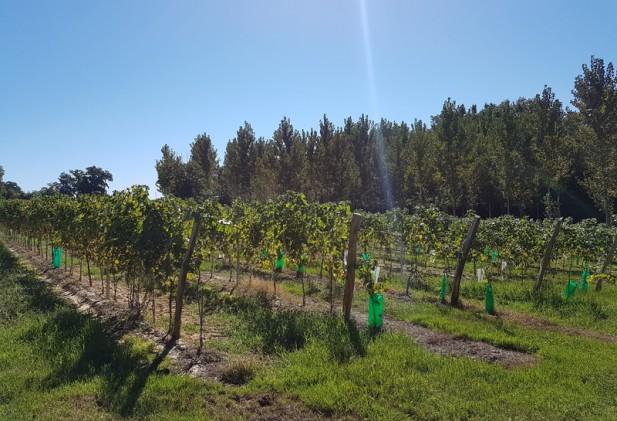 CP Région – Agriculture et forêt – La Région Occitanie lance 3 nouveaux Pass et Contrat pour soutenir le développement économique des entreprises agricoles et de la filière bois